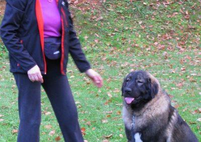 Šolanje-psov-začetni-tečaj