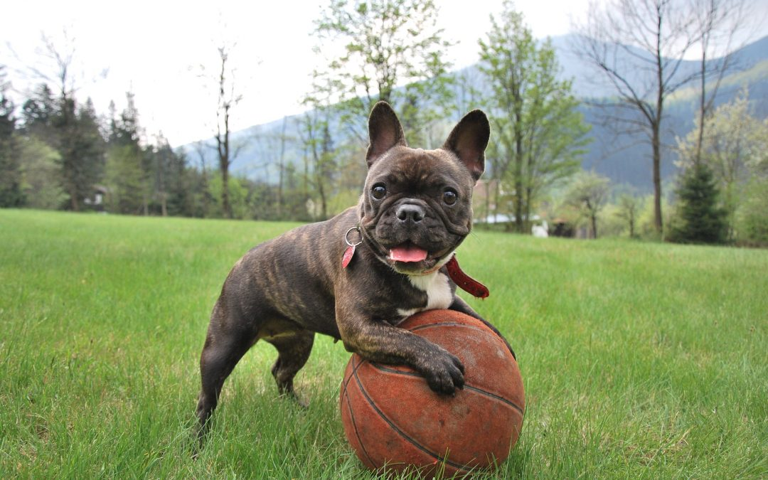 Vpis v spomladanske tečaje šolanja psov preko spleta