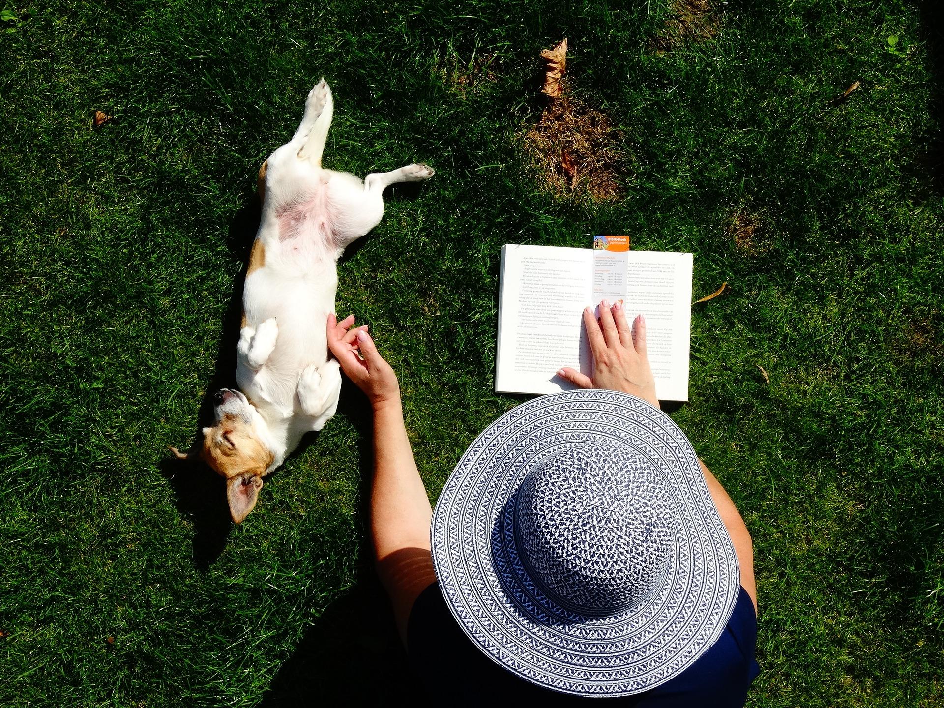 šolanje in vzgoja psa